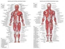 Anatomic_chart_m_5695e6d00d3d6
