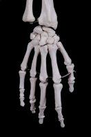 right hand of Skeleton