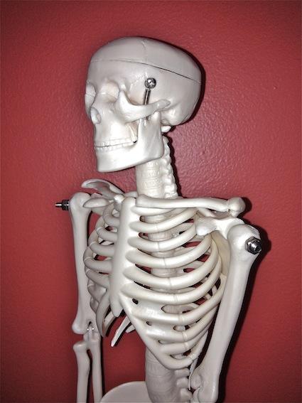 Mini Human Skeleton model