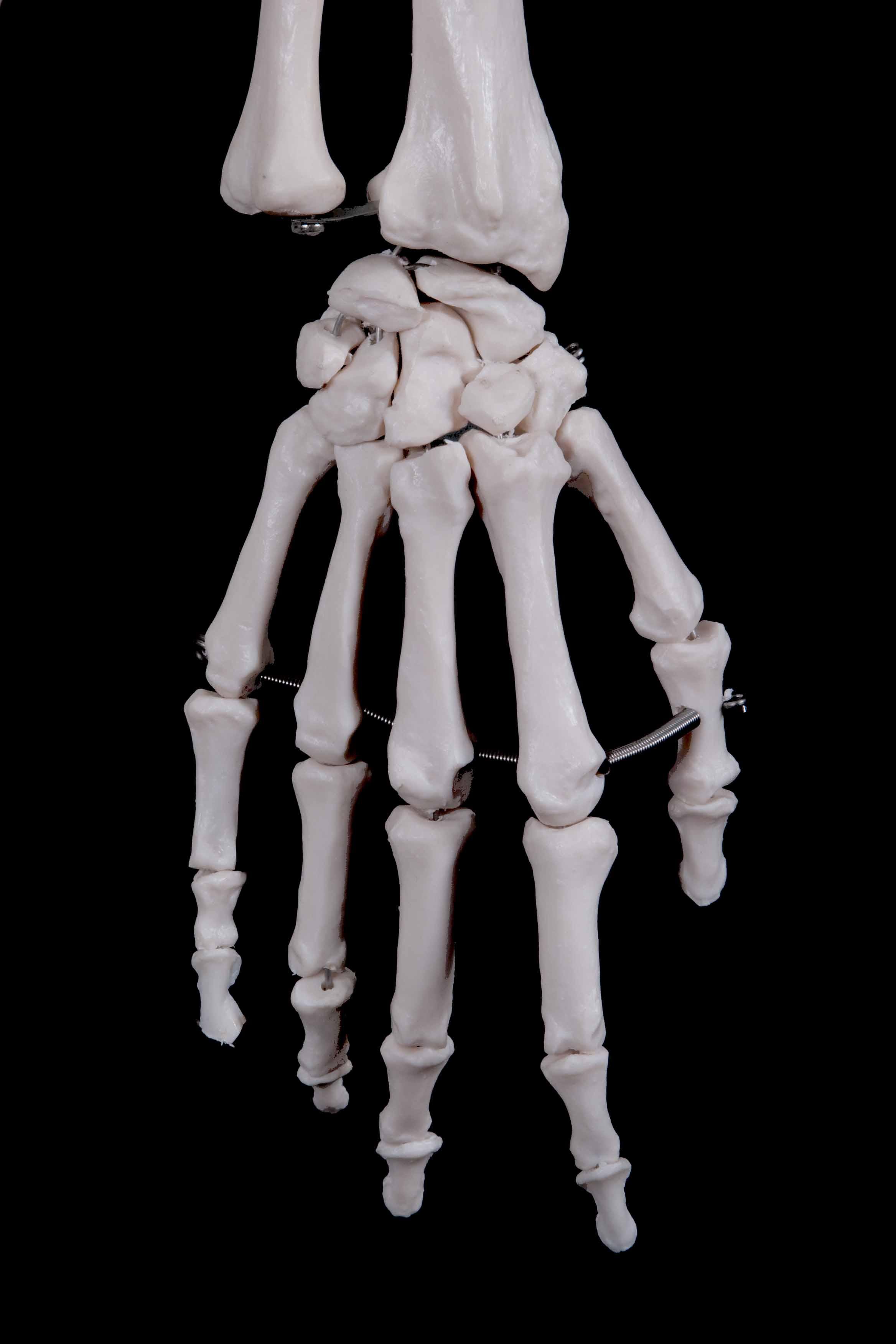 Human skeleton 180 mtrs the stethoscope shop pty ltd lightbox ccuart Choice Image